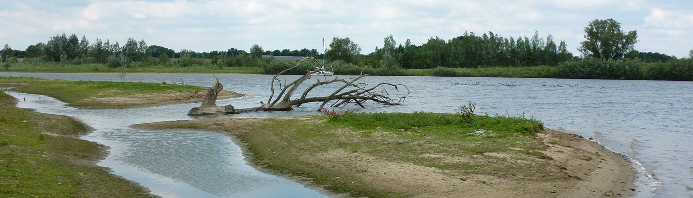 Nevengeul met dode boom