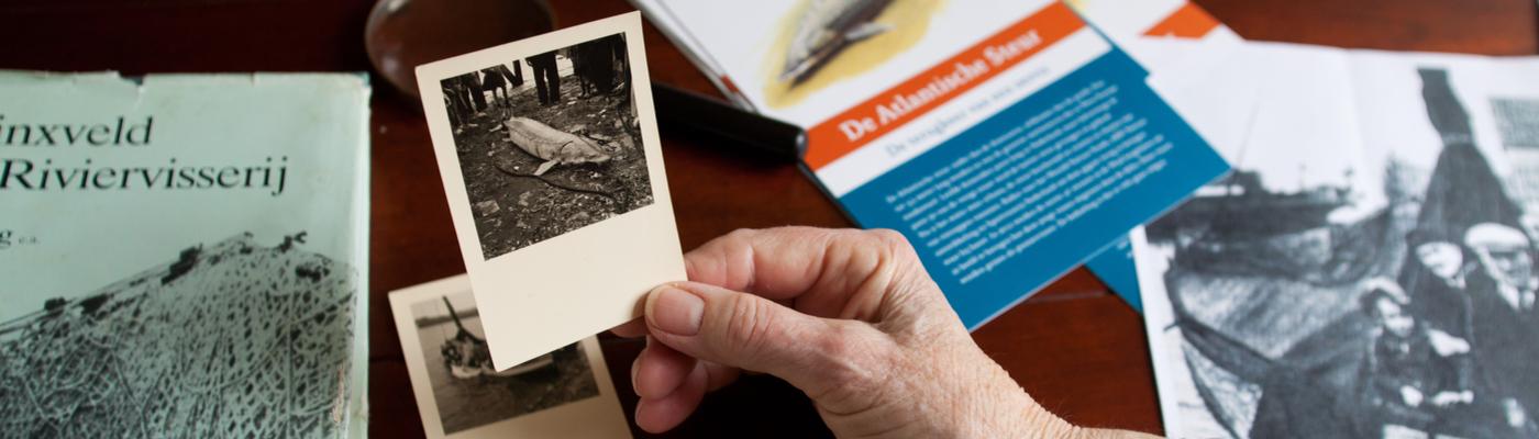 Historische foto van de laatste steur die gevangen werd op de Nieuwe Merwede.