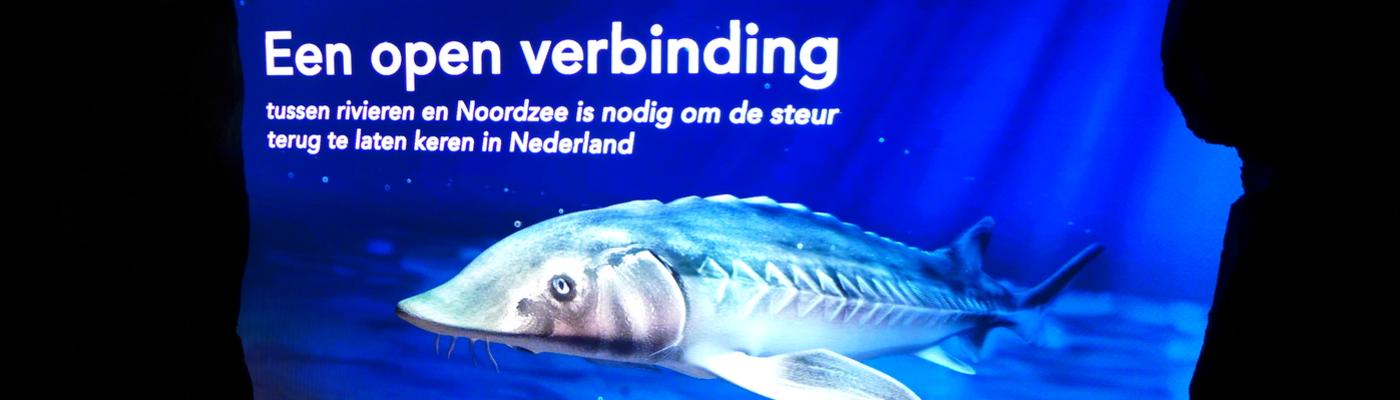 Haringvliet Steur Expo in Diergaarde Blijdorp
