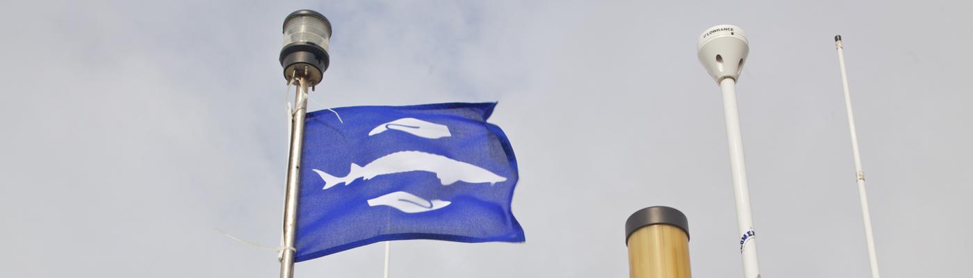 Steurenvlag als erkenning voor vangstmeldingen en terugzetten van steuren