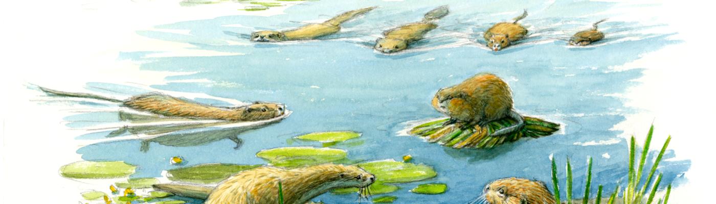 Otter en anderen