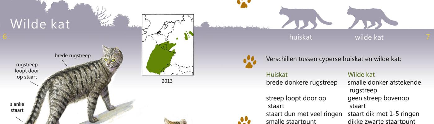 Roofdieren Veldgids Wilde kat