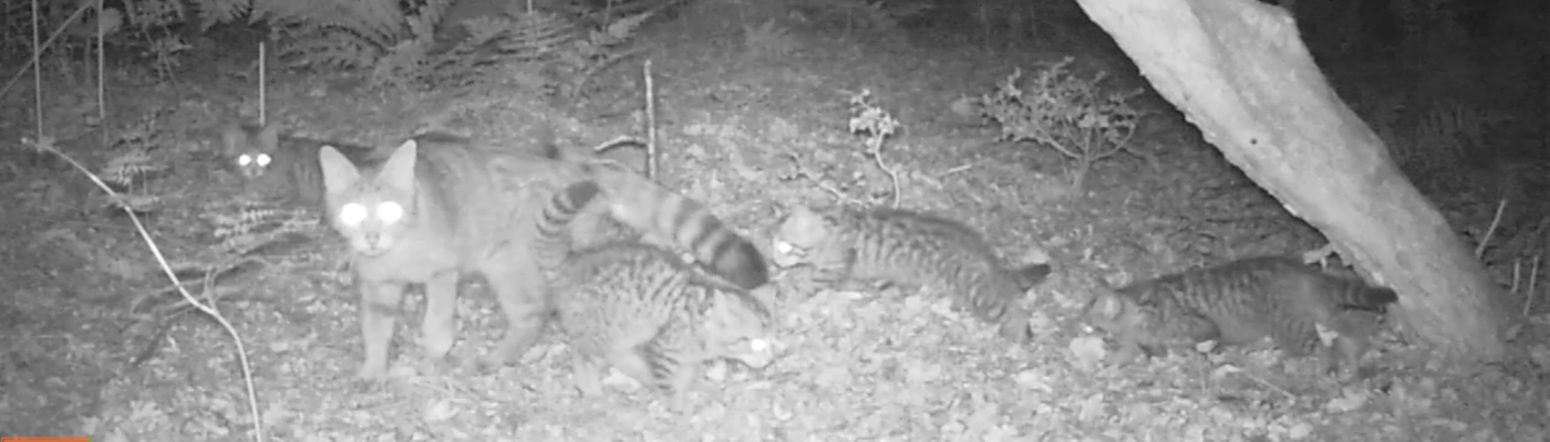 Wilde kat met kittens, foto: Laura Kuipers