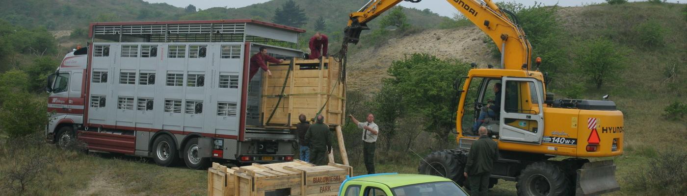 De eerste wisenten arriveren in 2007