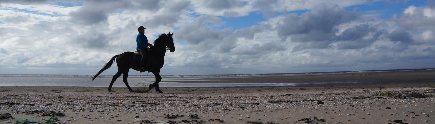 Paardrijden Zandmotor