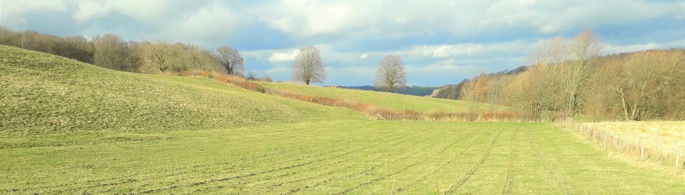 De vers aangeplante bomen en struiken zullen snel uitgroeien tot mooie hagen (foto Hettie Meertens)