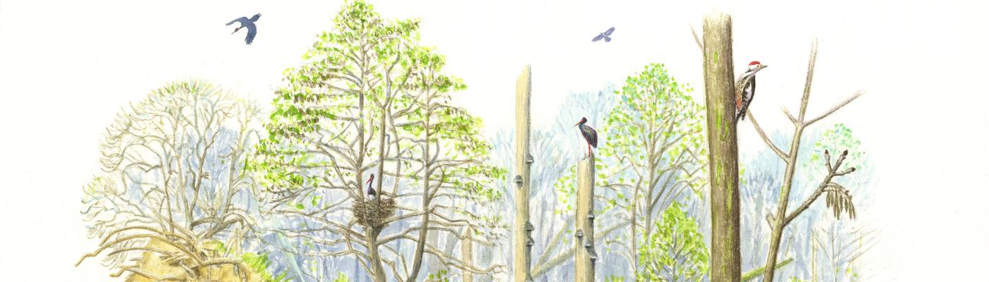 Toekomstbeeld van het leembos in de Geelders (Illustratie Jeroen Helmer)