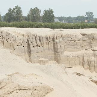 Oeverzwaluw kolonie Tijdelijke Natuur Steenwijk