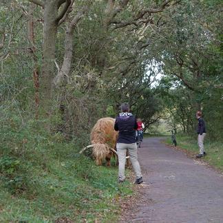 Houd afstand. In veel gebieden is dat minimaal 25 meter, maar in gebieden met wisenten 50 meter.