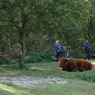 Gun de grazers ruimte, rust en privacy. Die hebben ze nodig.