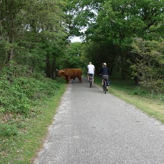 Als grazers op of naast het pad liggen of het pad oversteken, ook dan afstand houden. Even wachten en zo nodig met een boog eromheen gaan, en niet er doorheen wringen of slalommen.