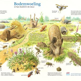 Bodemwoeling en haar sleutelrol in de natuur