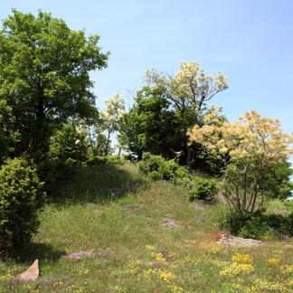 Landschap Oostelijke Rhodopen