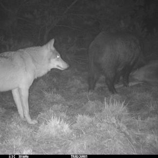 Wolf blijft op afstand
