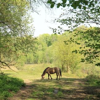 Konikpaarden in verlaten groeve