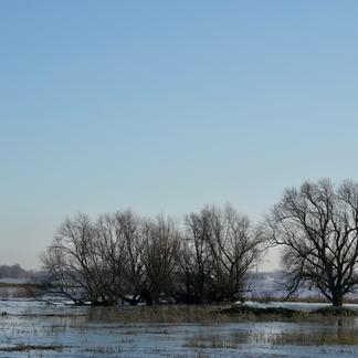 Hoogwater in de Konijnenwaard tussen Gendt en Bemmel