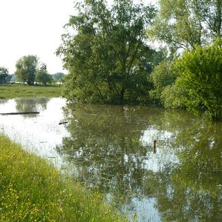 Zomerhoogwater bij Beuningen, 2013