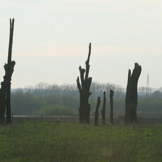 Meers Bomenmonument