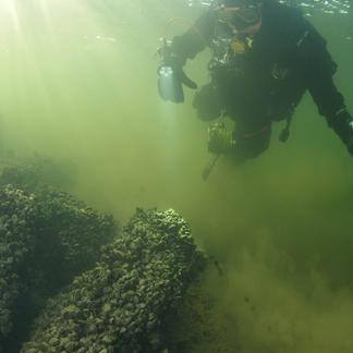 Quaggamossels duiker (foto: Roel van der Mast)