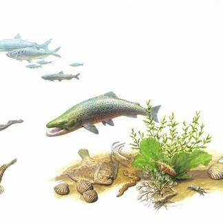 Vissen in het Haringvliet