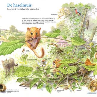 De hazelmuis: Boegbeeld van natuurlijke bosranden