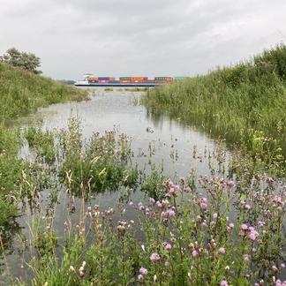 De hergraven geul stroomt vol. Foto Emmie Nuijen, Rivier Actief