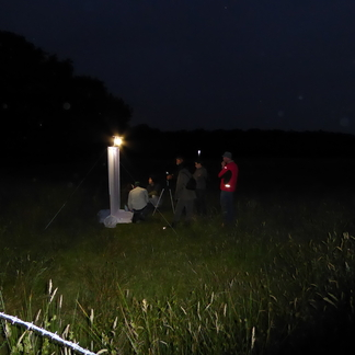 Nachtvlindernacht Kempen~Broek