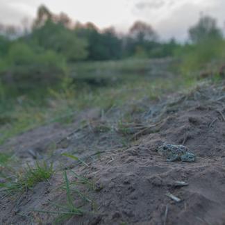 Knoflookpad, foto Douwe Schut