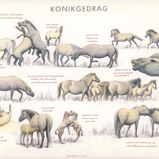 Zoekkaart Konik