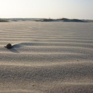 Konijnenkeutel in zand