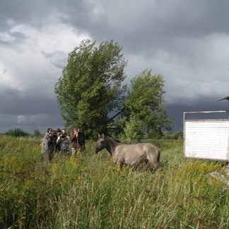 Konikpaard komt aan in Letland in 2007