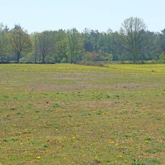 Door droogte is dit grasland van witbosgrasland verandert in bloemrijk grasland vol reigersbek en paardenbloem