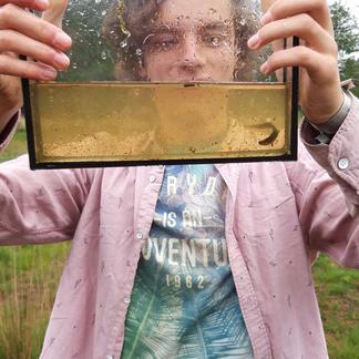 Beestjes zoeken in de Maashorst tijdens het 1000-soorten-weekend (foto Marc Poulussen)