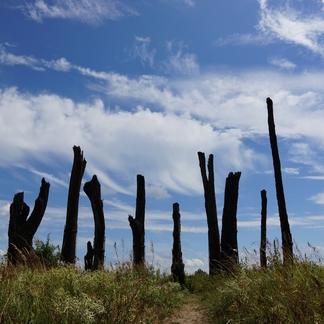 Woodhenge Millingerwaard Bomenmonument