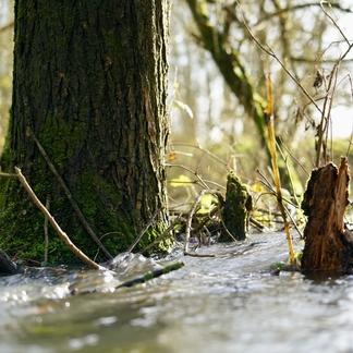 Hoogwater in het ooibos