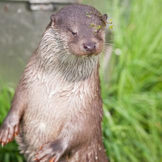 Help de otter en geef een vrije doorgang kado!