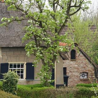 Dijkhuis Rijnstrangen
