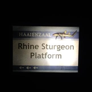Bijeenkomst Steurenplatform in Diergaarde Blijdorp
