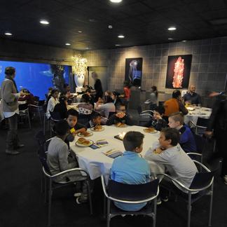Leerlingen van de Wilhelminaschool uit Rotterdam. Foto: Rob Doolaard