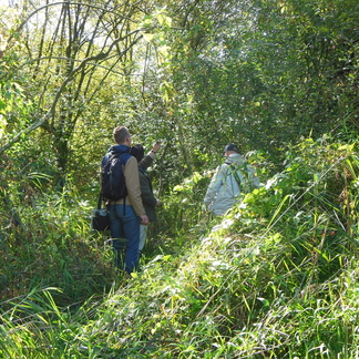 Op zoek naar de grote weerschijnvlinder in Het Groene Woud