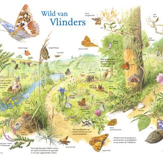 Zoekkaart Wild van Vlinders
