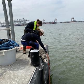 'Tassen' met lege oesterschelpen worden te water gelaten. Foto: Gijs van Zonneveld