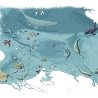. Vitale populaties haaien en roggen zijn nodig voor een gezonde Noordzee