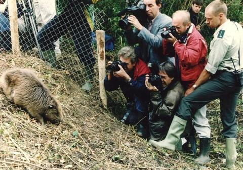 Bever uitzetting 1994 ANP - Herman Pieterse