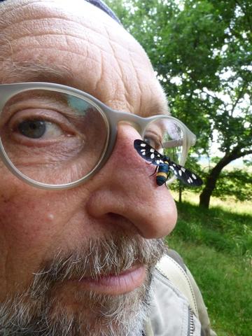 Selfie met phegeavlinder, foto: Hans van de Laar