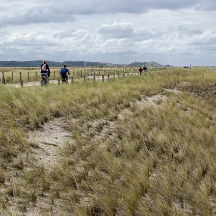 Hondsbossche duinen