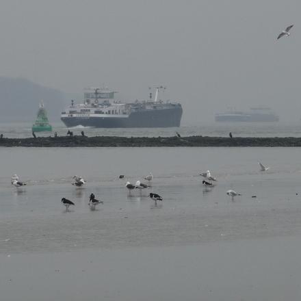 Vogels in de Groene Poort