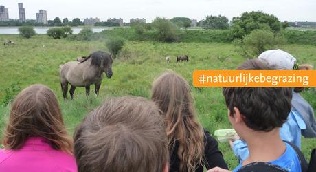 Konikpaarden en publiek op de Landtong Rozenburg in het Rotterdamse havengebied. Foto: Paul Grootenboer