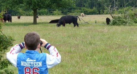 Kijken naar grote grazers. Foto: Rob Brinkhof