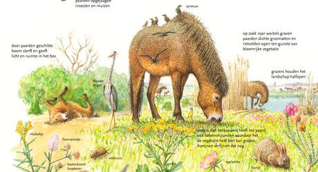 Wilde paard en zijn sleutelrol in de natuur